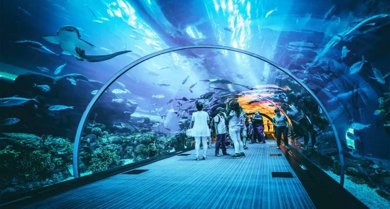 Dubai mall acquario - Dubai Attrazioni