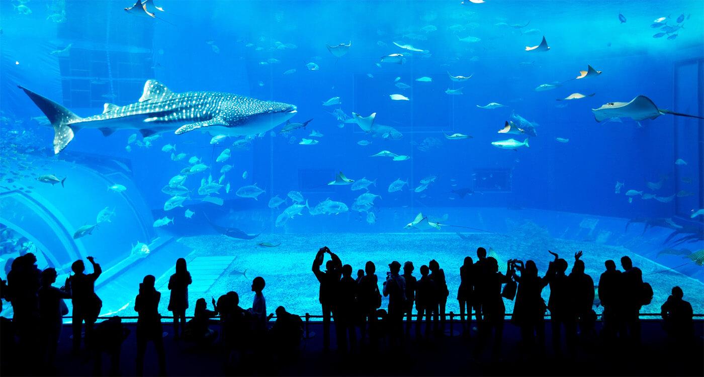 l'acquario di Dubai - cose da fare a Dubai