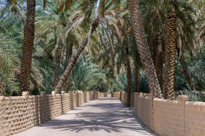 Oasi di Al Ain